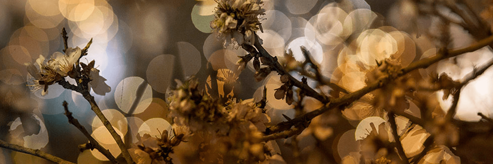 Interview with the flower artist Jordi Vilà | The Room Studio